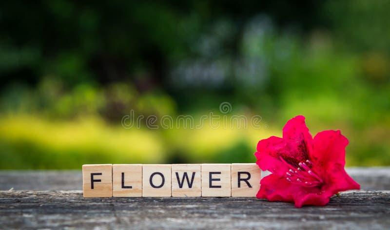 Il fiore di parola ha composto delle plance di legno leggere ed il rosso rhododen immagini stock libere da diritti
