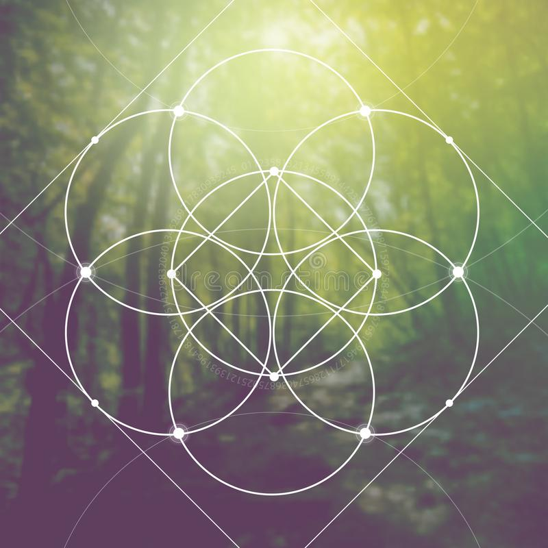 Il fiore di vita il collegamento circonda il simbolo antico davanti al fondo fotorealistico vago della natura La geometria sacra  fotografia stock