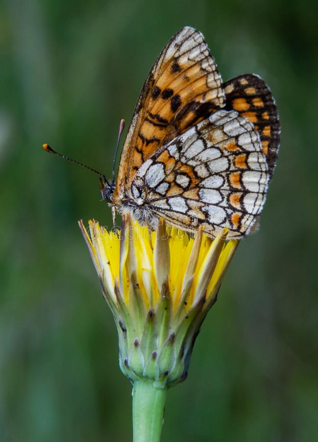 Il fiore e la farfalla fotografia stock