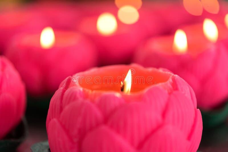 Il fiore esamina in controluce la combustione alla notte immagine stock