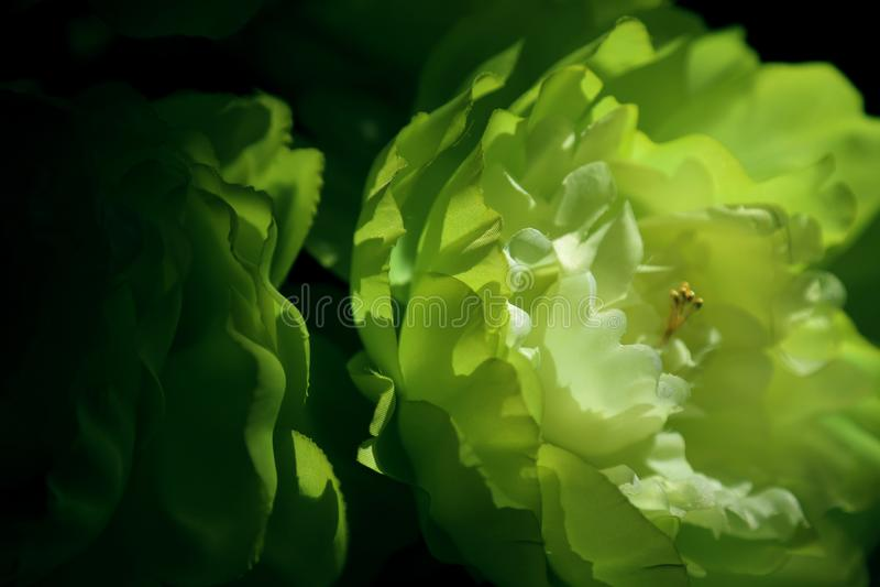 Il fiore falso installa nella casa fotografia stock