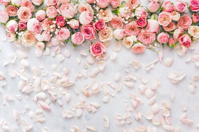 Il fiore fresco è aumentato fondo dei petali e dei fiori immagini stock libere da diritti