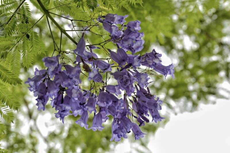 Il fiore porpora ha sottolineato fotografia stock libera da diritti