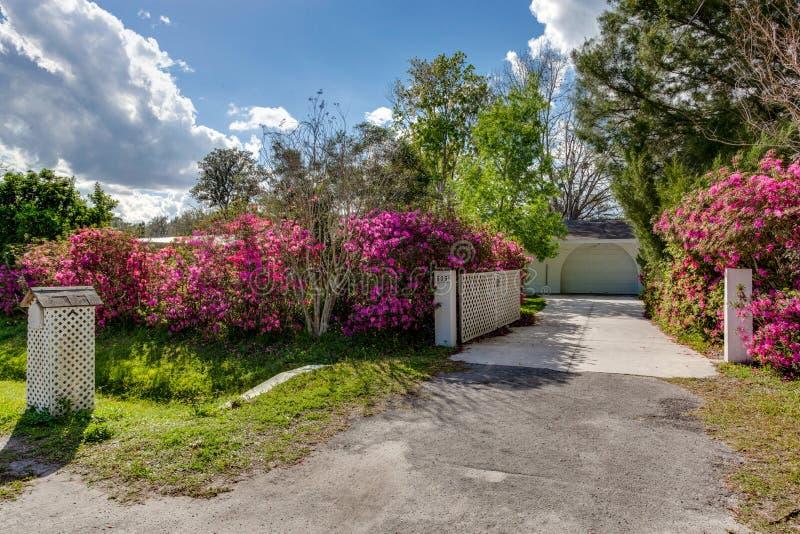 Il fiore porpora rosa imbussola allineare la strada privata lunga dall'abbellimento d'accoglienza dell'entrata della via immagine stock
