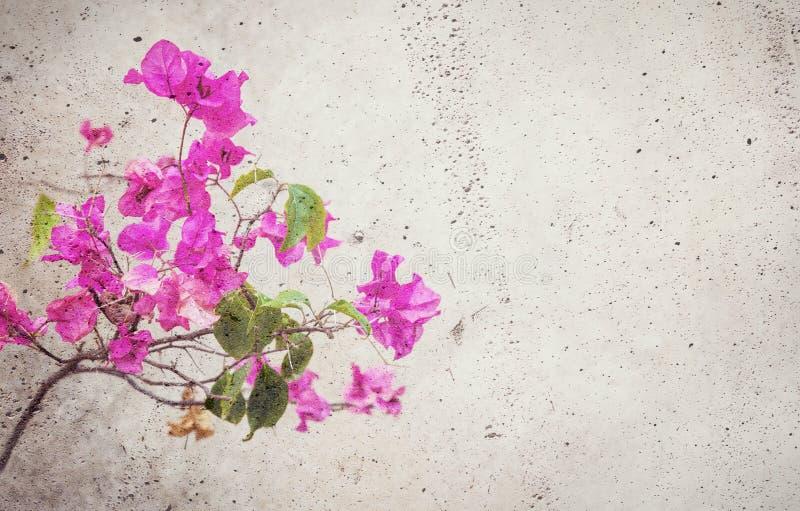 Il fiore rosso di fioritura si è mescolato nel muro di cemento immagini stock