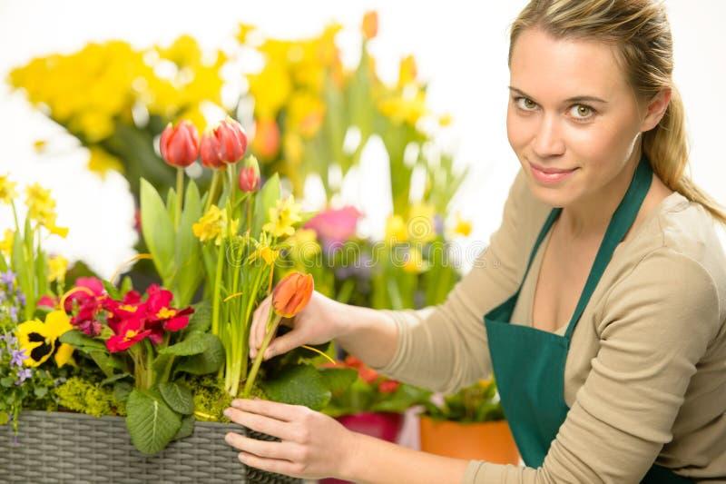 Il fiorista sistema le piante variopinte dei fiori della molla immagini stock