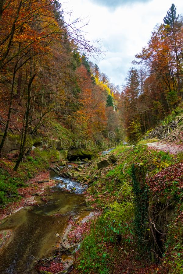 Il fiume calmo entra in una bella foresta di autunno immagini stock