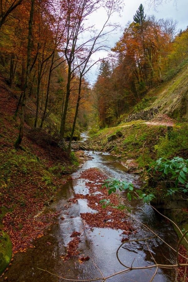 Il fiume calmo entra in una bella foresta di autunno immagine stock