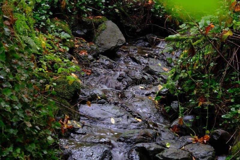Il fiume che entra sopra le rocce nel muschio ha riempito il legno verde di caduta immagini stock libere da diritti