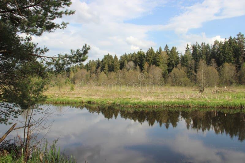 Il fiume del castoro vicino ad una primavera con acqua pulita fotografie stock libere da diritti