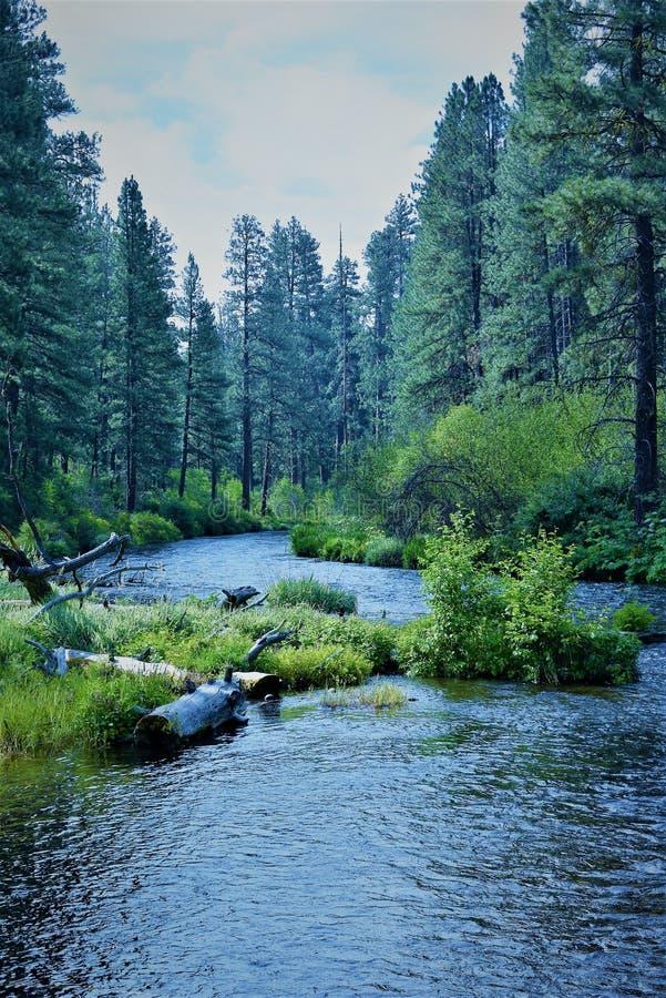 Il fiume di Metolius esegue il thur una foresta fertile immagine stock