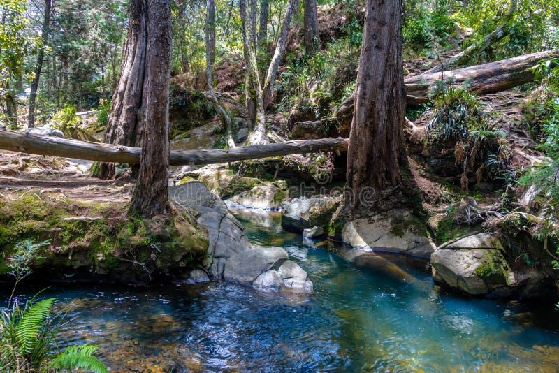 Il fiume ed il legno a Arvi parcheggiano - Medellin, Antioquia, Colombia fotografia stock libera da diritti