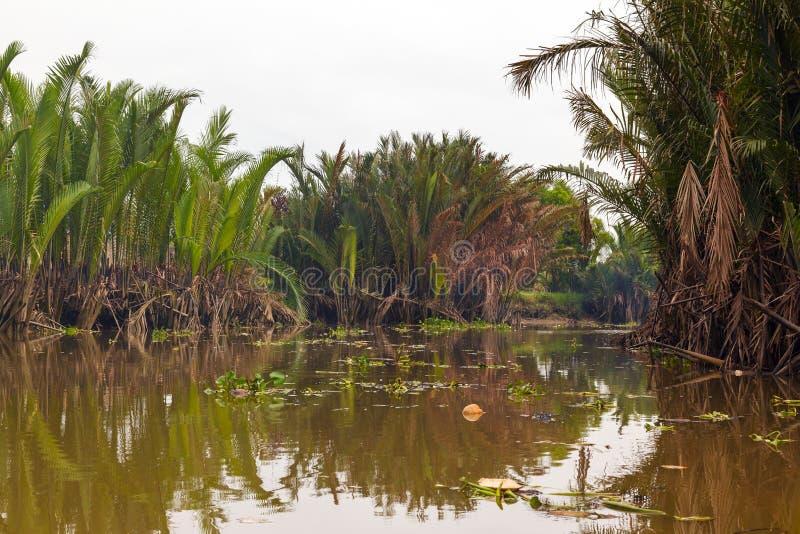 Il fiume Giallo nella giungla della palma del Vietnam fotografie stock