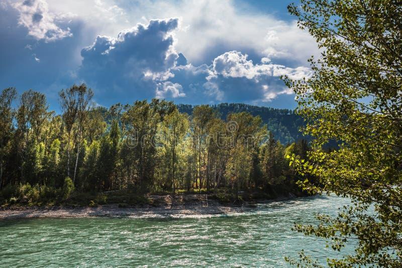 Il fiume Katun Paesaggio del fiume del Altai fotografia stock libera da diritti