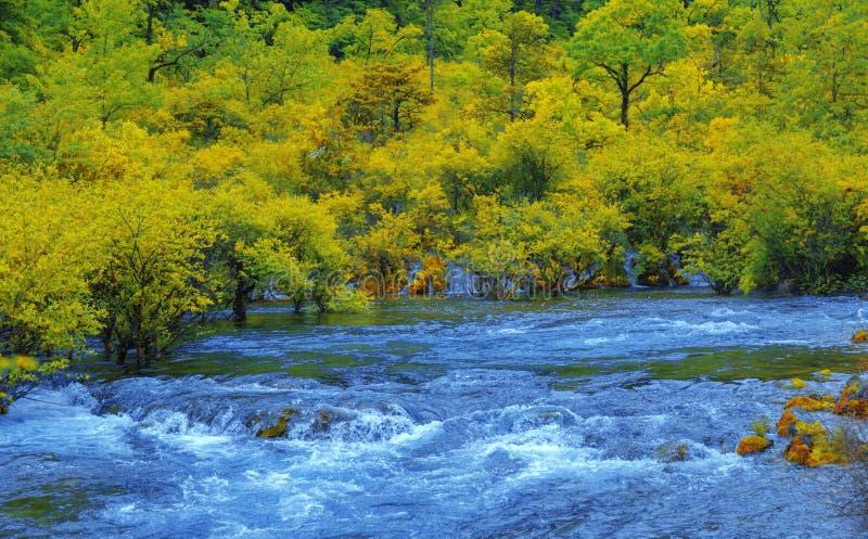 Il fiume nella valle, l'acqua che precipita contro gli arbusti acquatici L'acqua si precipita contro il letto immagini stock