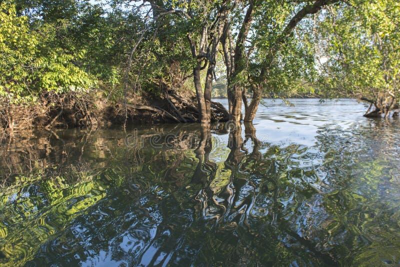 Il fiume Zambezi fotografie stock libere da diritti