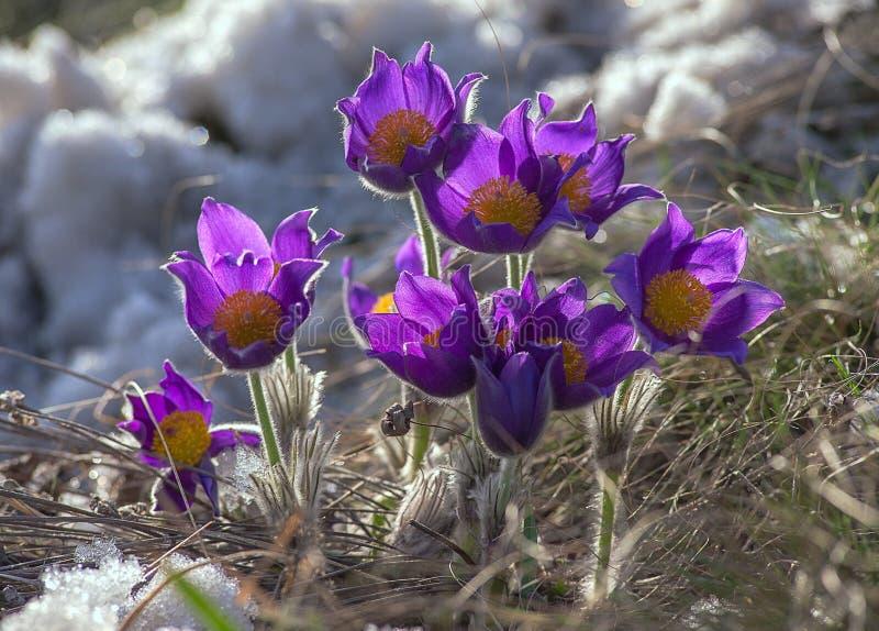 Il Flowerses in neve. fotografia stock