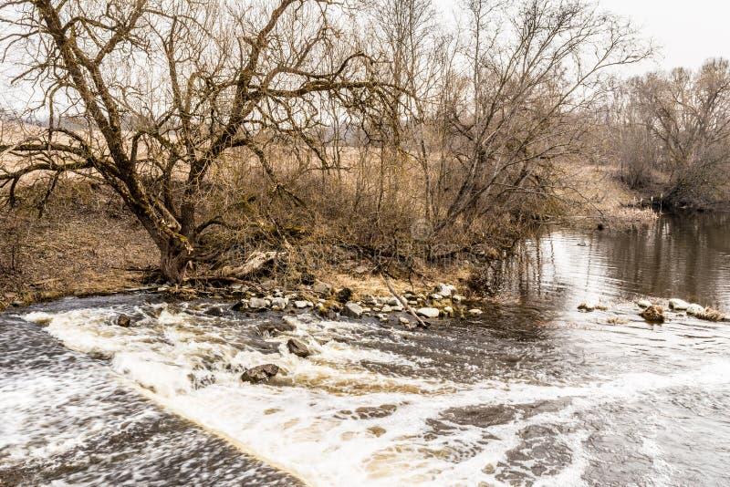 Il flusso di acqua con la riflessione degli alberi, di un fiume con le pietre e degli alberi senza fogliame, giorno nuvoloso in m immagine stock