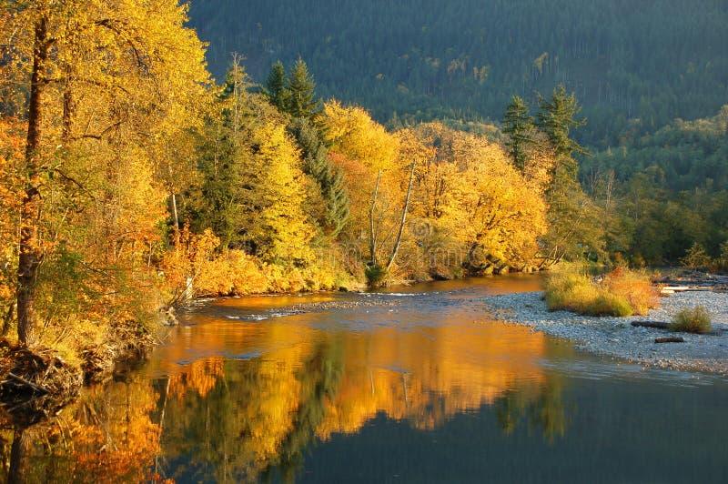 Il fogliame di caduta ha riflesso nel fiume di Stillaguamish in Washington State immagini stock libere da diritti