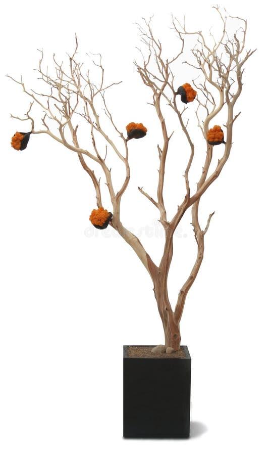 Il foglio di legno della vecchia corteccia dell'albero lascia l'arancio della piantatrice immagini stock libere da diritti