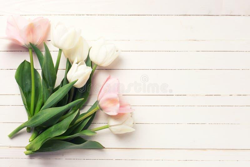 Il fondo con il tulipano rosa e bianco fresco fiorisce fotografie stock libere da diritti