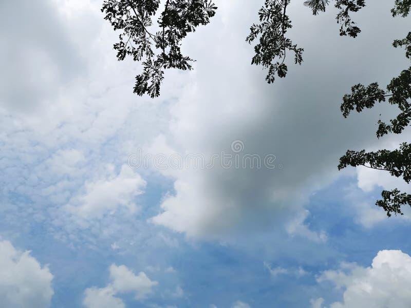 Il fondo dei rami di albero e le foglie profilano sul cielo nuvoloso blu immagine stock libera da diritti