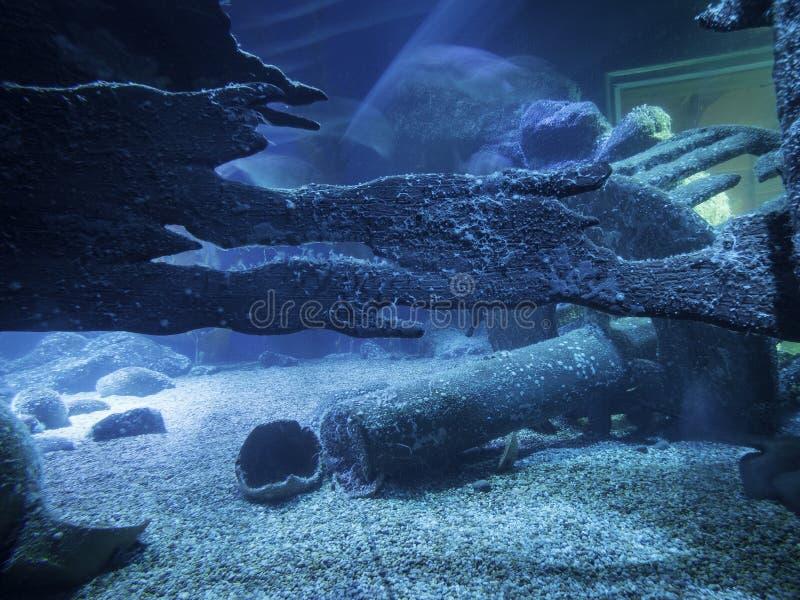 Il fondo dell'oceano fotografia stock