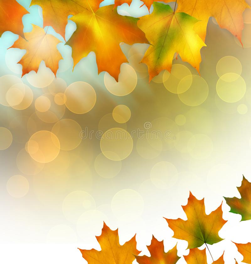 Il fondo di autunno con giallo dell'acero va, autunno luminoso fotografie stock libere da diritti