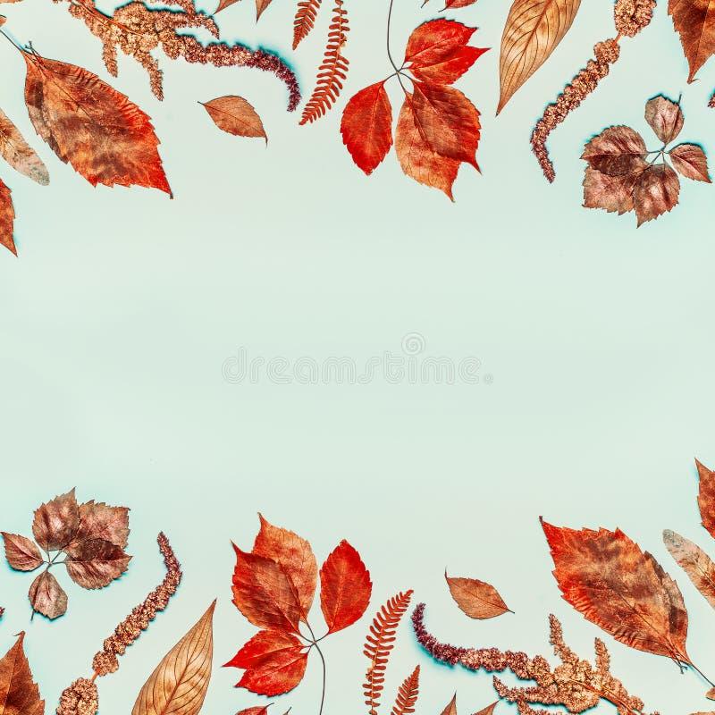Il fondo di autunno con la varia caduta secca ed urgente variopinta va, vista superiore immagini stock