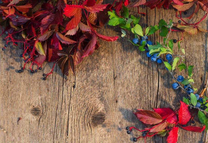 Il fondo di legno incorniciato da rosso di autunno va e ramo verde w immagine stock