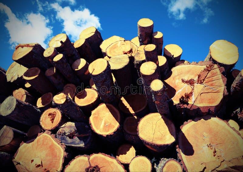 Il fondo di molti tronchi di albero ha tagliato dal taglialegna con vintag fotografia stock libera da diritti