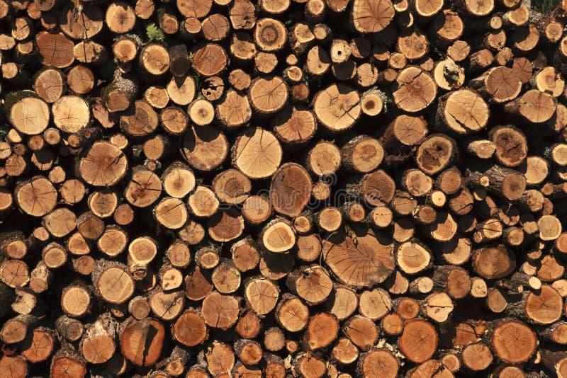 Il fondo di vecchio tronco di legno incrinato con gli anelli dell'età ha impilato per asciugarsi in un mucchio all'aperto immagini stock libere da diritti