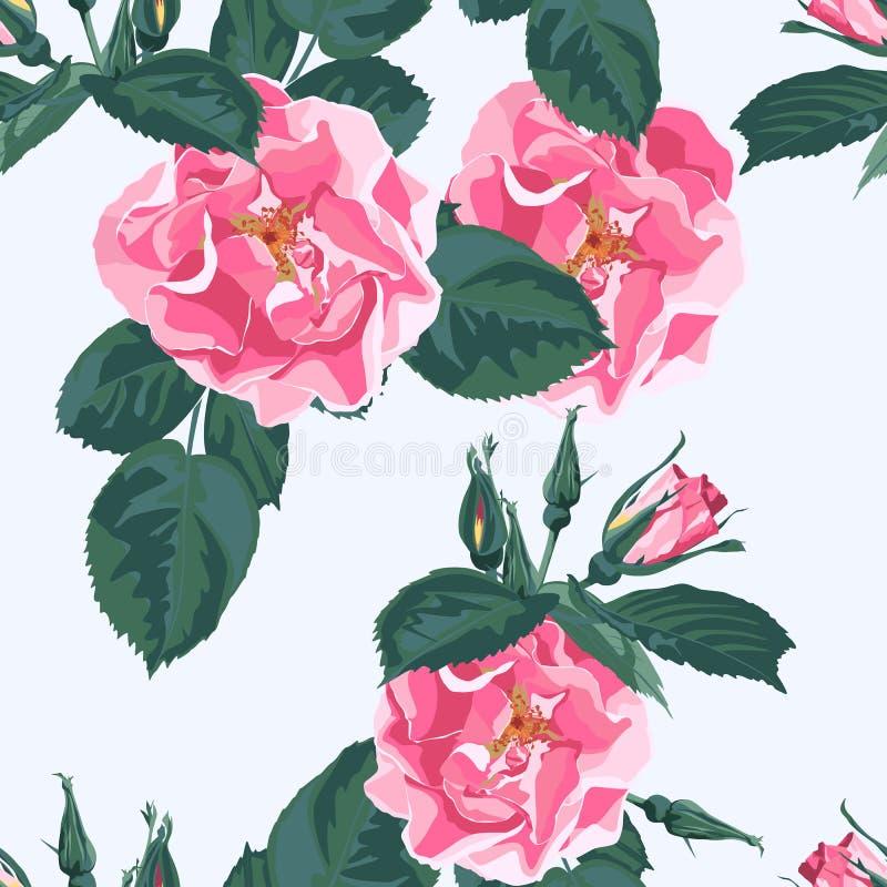 Il fondo floreale d'avanguardia con il giardino di rosa canina rosa selvaggio di canina di rosa fiorisce Illustrazione botanica d illustrazione vettoriale