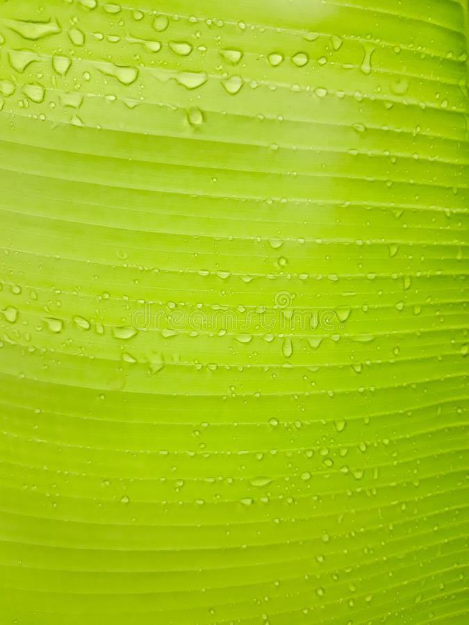 Il fondo lascia verde con le chiare linee E là gocciolina quello foglie fotografie stock