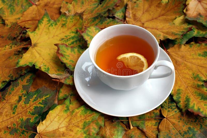 Il fondo molto autunno ha ingiallito le foglie di acero e una tazza di tè immagini stock libere da diritti