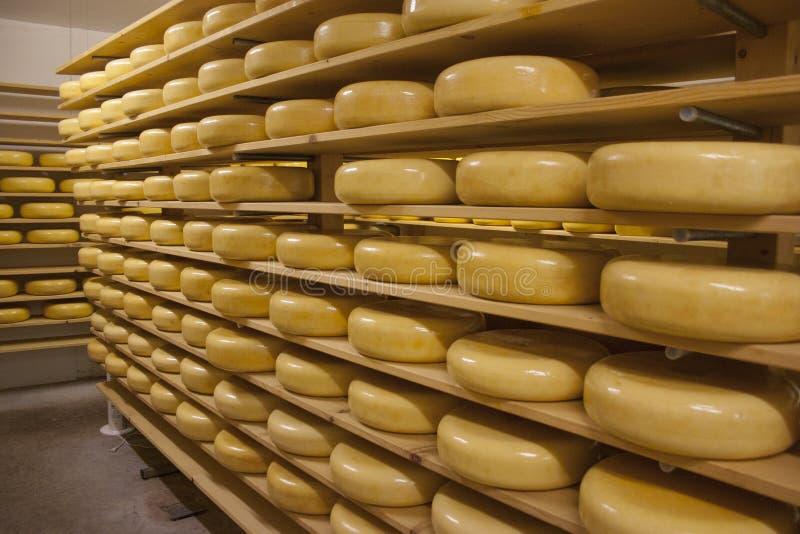 Il formaggio Gouda spinge sugli scaffali in un negozio fotografia stock libera da diritti