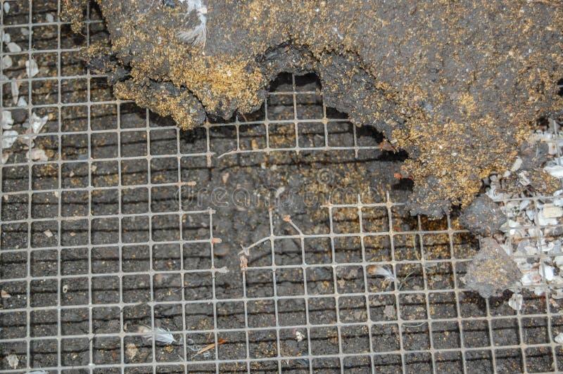 Il foro ha masticato attraverso il reticolato di saldatura in uccelliera dai ratti fotografia stock