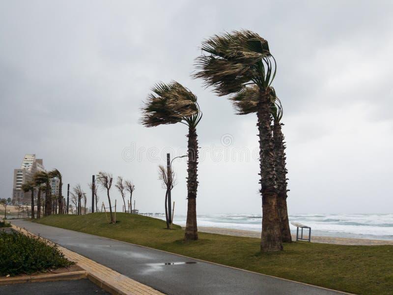 Il forte vento soffia dal mare e piega le palme sulla costa immagini stock libere da diritti