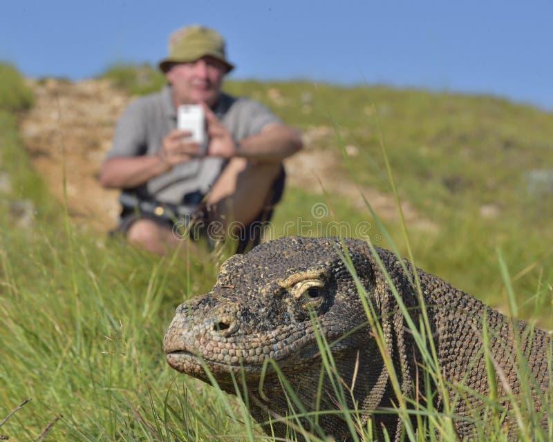 Il fotografo e il komodoensis di varano dei draghi di Komodo sull'isola Rinca Il drago di Komodo è la più grande lucertola vivent immagini stock libere da diritti