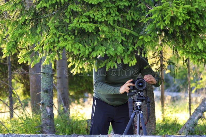 Il fotografo ha installato la macchina fotografica ed i pellami dietro i rami dell'abete al bordo della foresta fotografia stock libera da diritti