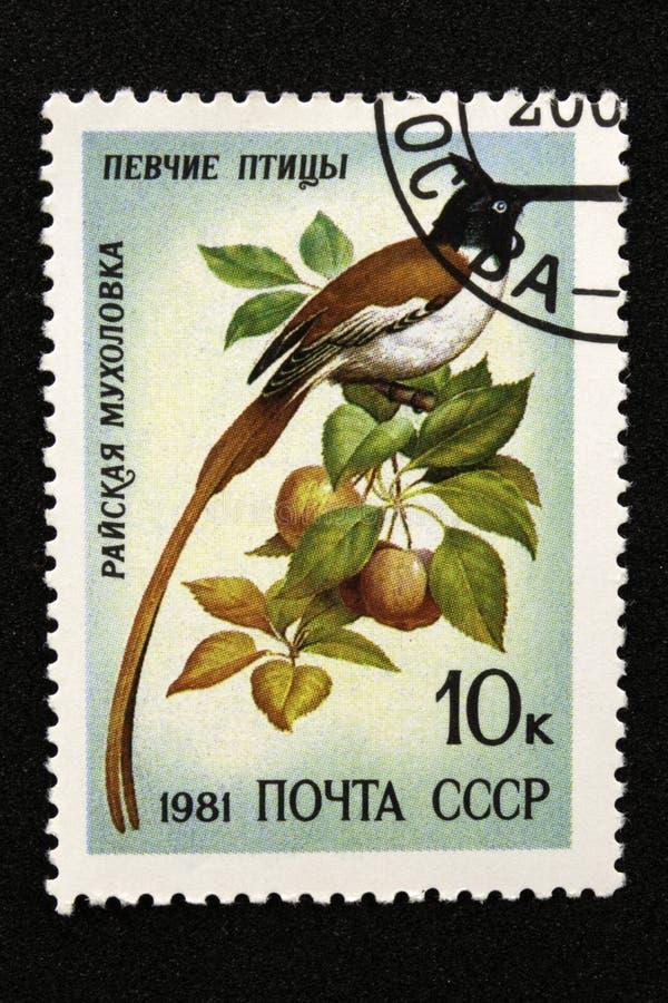 Il francobollo dell'URSS, serie - Songbirds, 1981 immagini stock