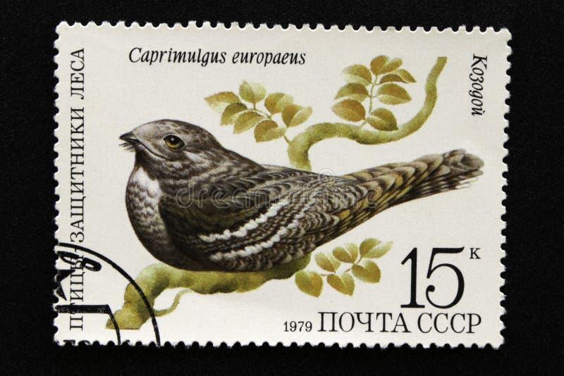 Il francobollo dell'URSS, serie - uccelli - dimostratori della foresta, 1979 fotografie stock