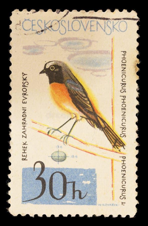 Il francobollo ha stampato in Cecoslovacchia che mostra un redstart comune, phoenicurus del Phoenicurus fotografia stock libera da diritti