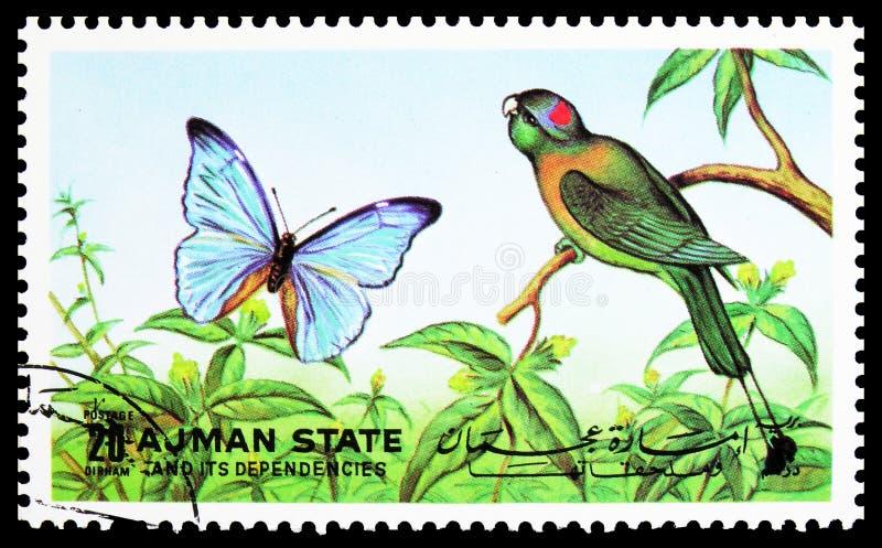 Il francobollo pubblicato ad Ajman (Emirati Arabi Uniti) mostra i gusti, le farfalle e le farfalle al petto di colore giallo Prio immagine stock libera da diritti