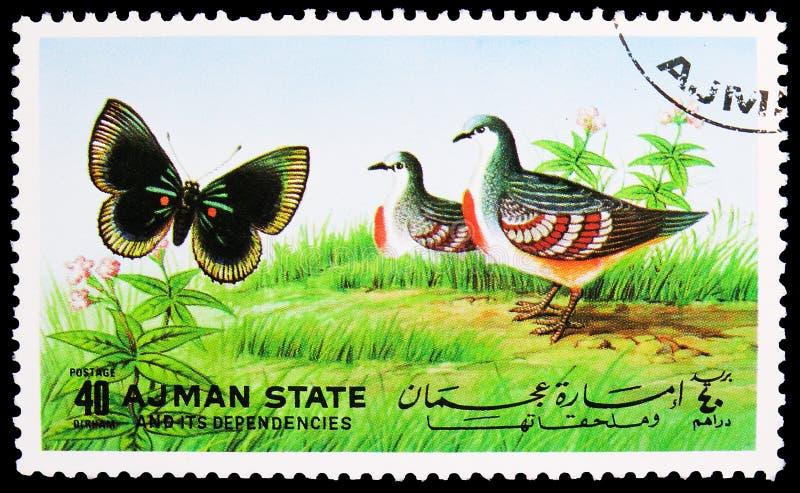 Il francobollo stampato ad Ajman (Emirati Arabi Uniti) mostra farfalle e uccelli, serie, 40 - dirham degli Emirati Arabi Uniti, c fotografia stock libera da diritti