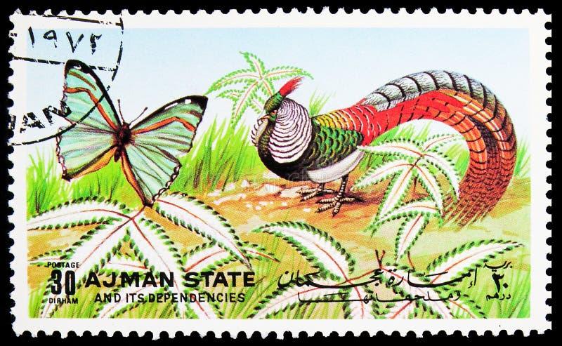 Il francobollo stampato ad Ajman (Emirati Arabi Uniti) mostra farfalle e uccelli, serie, 45 - dirham degli Emirati Arabi Uniti, c immagini stock libere da diritti