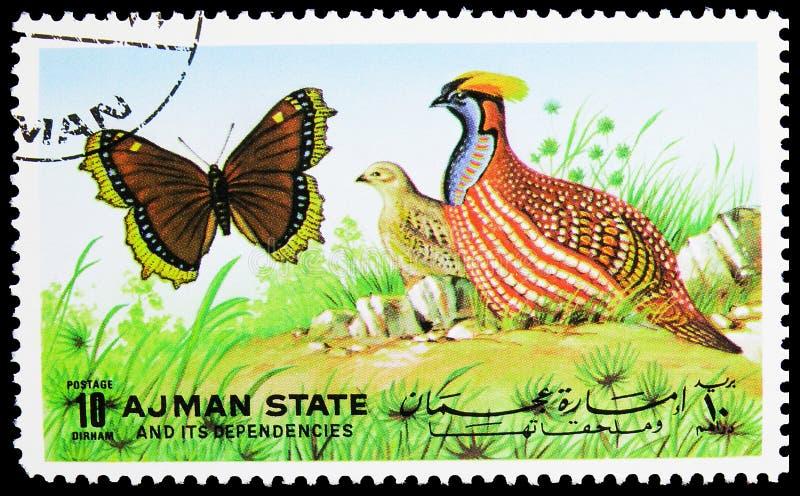 Il francobollo stampato ad Ajman (Emirati Arabi Uniti) mostra farfalle e uccelli, serie, 10 - dirham degli Emirati Arabi Uniti, c fotografia stock