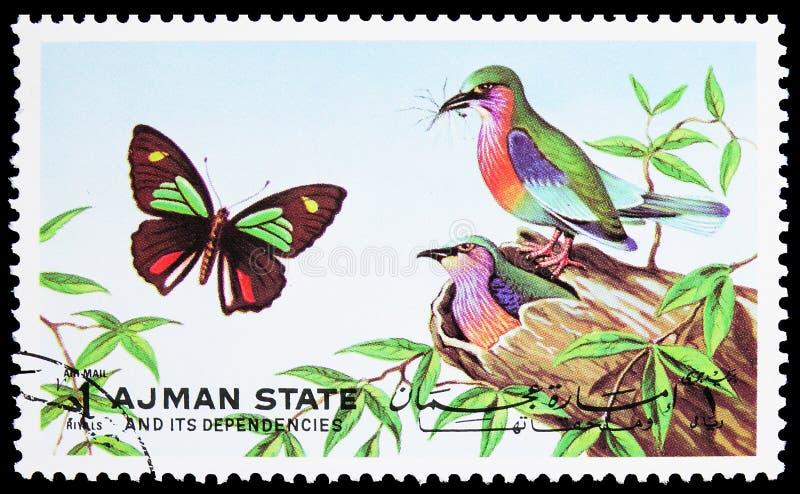 Il francobollo stampato ad Ajman (Emirati Arabi Uniti) mostra la Merops sp e Parides sp , Butterflies e Uccelli serie 1 Arabi Uni fotografie stock
