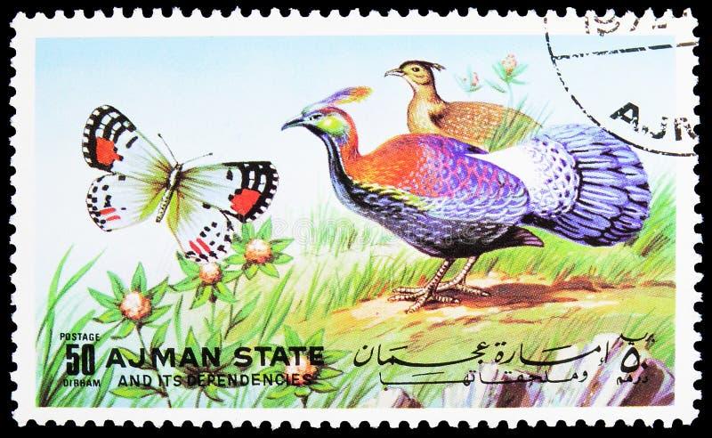 Il francobollo stampato ad Ajman (Emirati Arabi Uniti) mostra il Monale cinese (Lophophorus lhuysii), le farfalle e la serie Ucce immagine stock