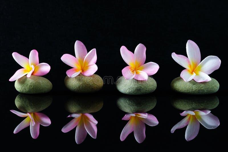 Il frangipane fiorisce sulle pietre di uno zen con la riflessione immagini stock libere da diritti